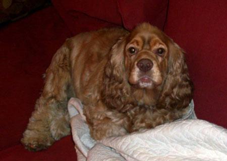 Ollie, Sep 2010