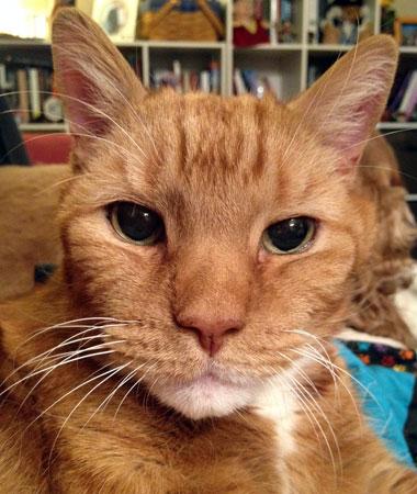 cat - charlie