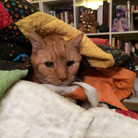 Cat and quilts.