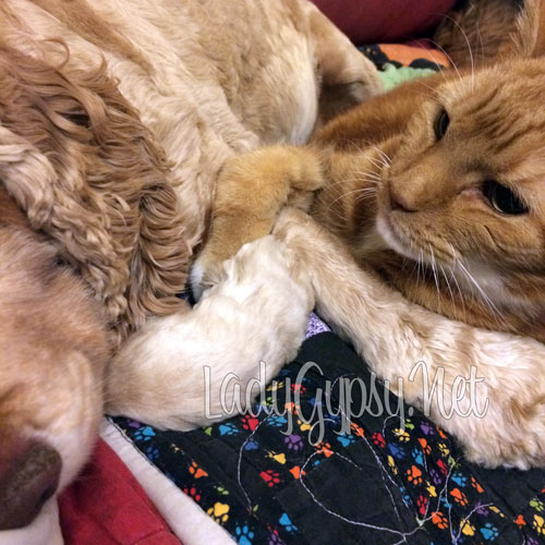 Ollie and Charlie, holding hands. (c) me, Kim Russell