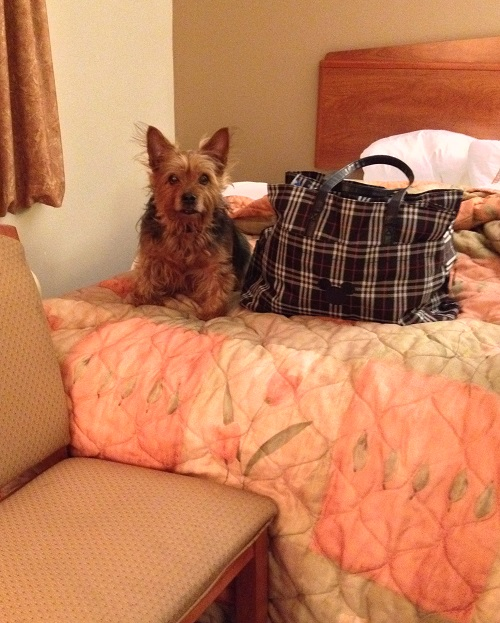 In a hotel room in Michigan. Smaller than my overnight bag. The chair was to help him get on the bed with me.